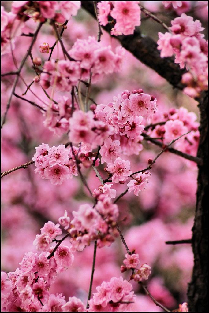 Cansano Primavera