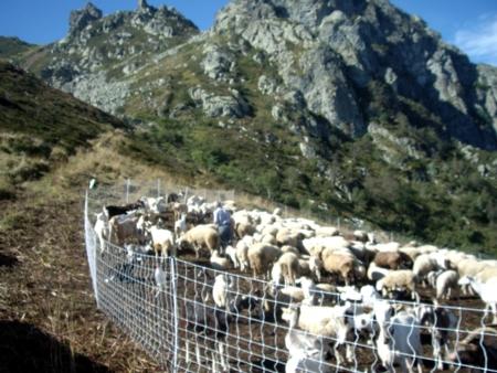 Stazzo pecore cansano for Recinto elettrico per capre